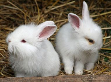 Znani dobitniki nagrad Društva gojiteljev malih pasemskih živali Ormož