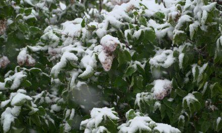Dan upora proti okupatorju v snegu