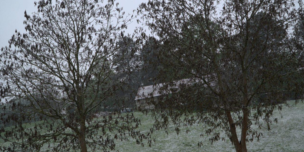 Kmetijsko gozdarska zbornica podala prvo OCENO ŠKODE po pozebi