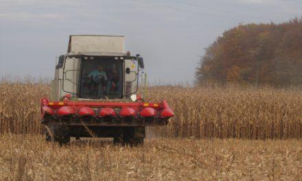 V podjetju Jeruzalem SAT d.d. DE Poljedelstvo pridelali blizu 4500 ton koruze