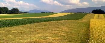 V zadnjih 25 letih smo v Sloveniji izgubili vsaj 85 tisoč hektarjev kmetijskih zemljišč