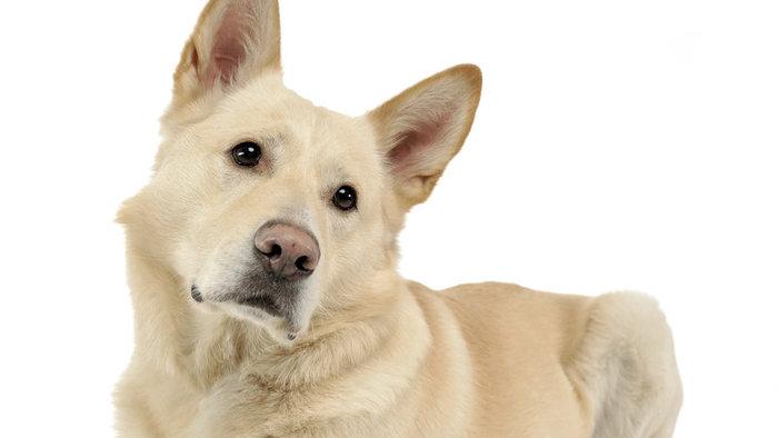 Okrutnost ne pozna meja: V gozdu privezal psa in ga pustil umreti (Kronologija pomembnejših dogodkov na območju Policijske postaje  Ormož)