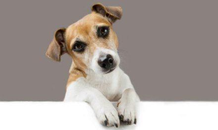 Policija svetuje: Popazite na svoje pse ( za kršitve Zakona o zaščiti živali globe od 200 do 800 evrov)