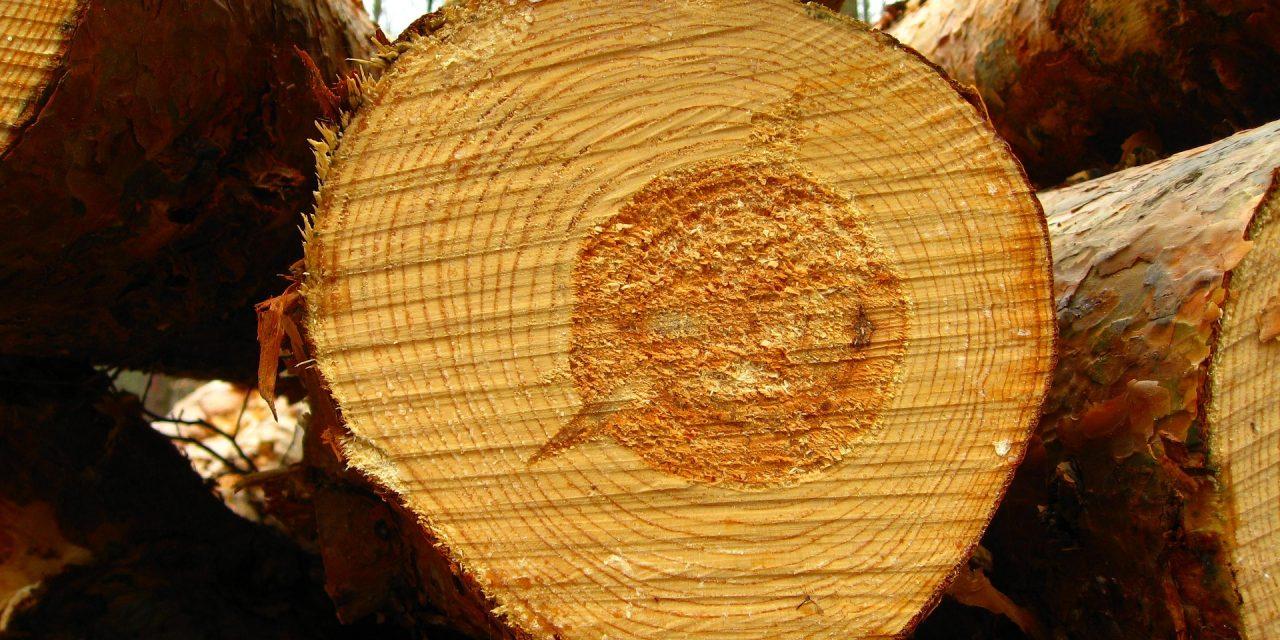 Kradli so les (Kronologija pomembnejših dogodkov na območju Policijske postaje Ormož v minulem dnevu)