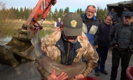 Ribiška družina ORMOŽ pričela s sanacijo ormoškega ribnika