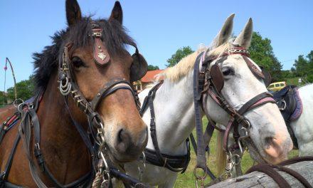 S ČETRTEGA mednarodnega srečanja kočij in ljubiteljev konj na Grabah (Središče ob Dravi)