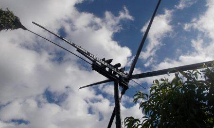 Ob največjem klopotcu na svetu še potomka najstarejše trte